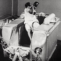 The Dog Laika Was Carried By Sputnik-2